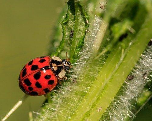 pest control (2)