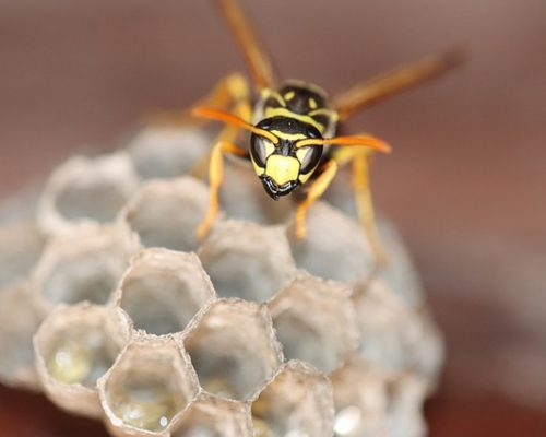 pest control (3)